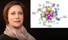 מונעים אסונות עתידיים: מודל חישובי למחלת לב גנטית